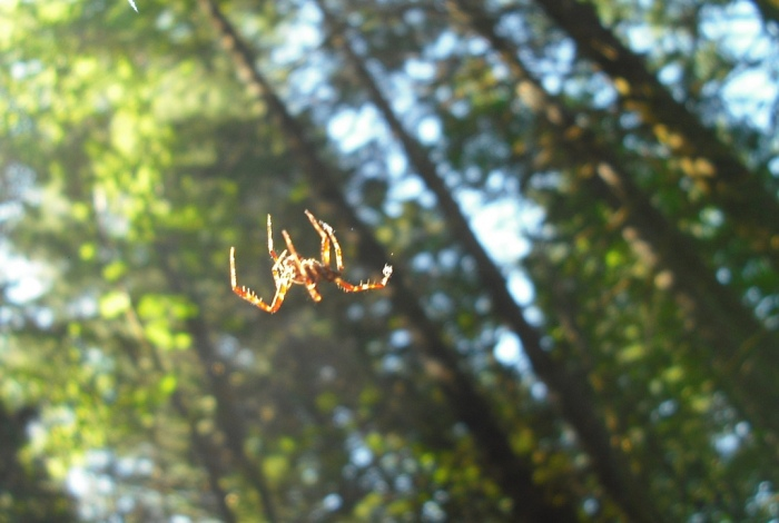 A spider spins its web along a trail in the Columbia River Gorge of Oregon. Photo by Tim Graves