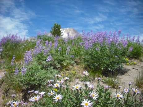 August Wildflowers. Photo by Tim Graves