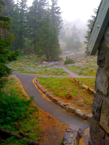 September wildflowers behind the Timberline Lodge. (2011) Photo by Tim Graves