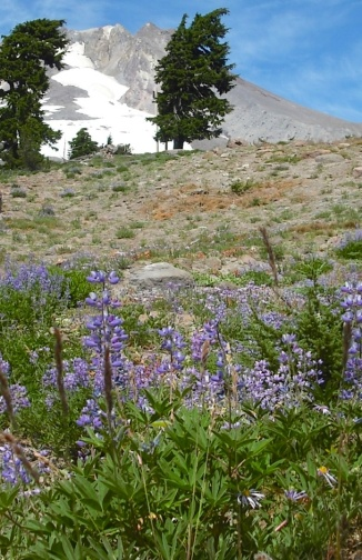 August wildflowers from the Pacific Crest Trail. Photo by Tim Graves