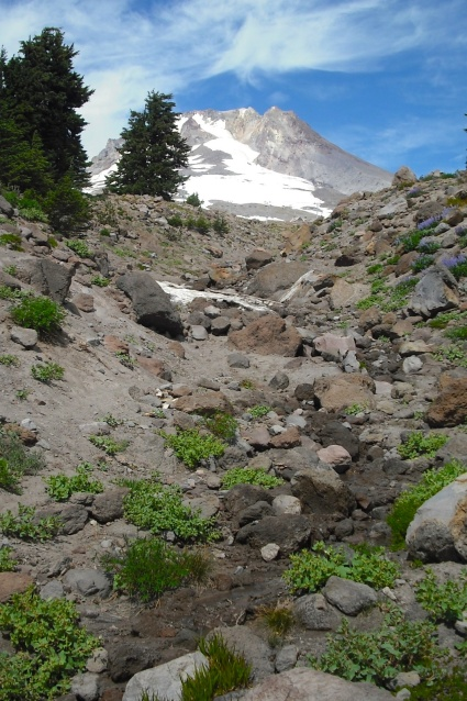 Residual Snow on Mt. Hood during August 2012. Photo by Tim Graves
