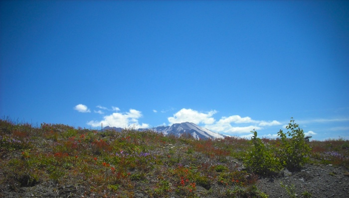 Mt. St. Helens (July 2013). Photo by Tim Graves.
