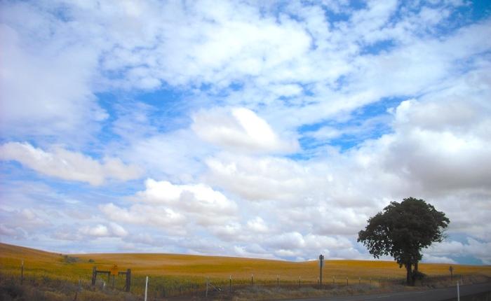Gratitude: Perceiving theDivine
