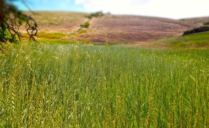 Communal Grasses