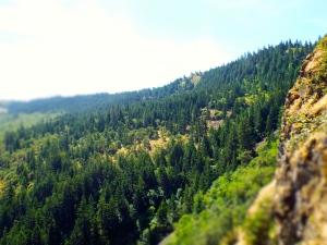 One of the many remarkable views on the trail up to McCall Point near Rowena, Oregon. Photo by Tim Graves