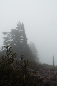 A foggy view toward the northwest from the top of Wind Mountain. Photo by Tim Graves