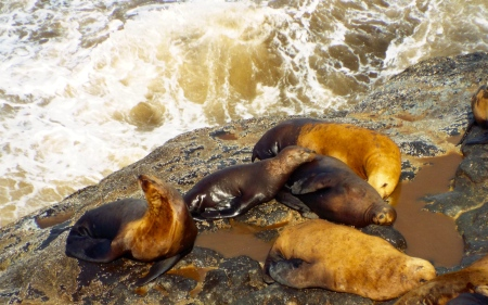 Sea lions at Sea Lion Caves sun themselves on the rocks. Photo by Tim Graves