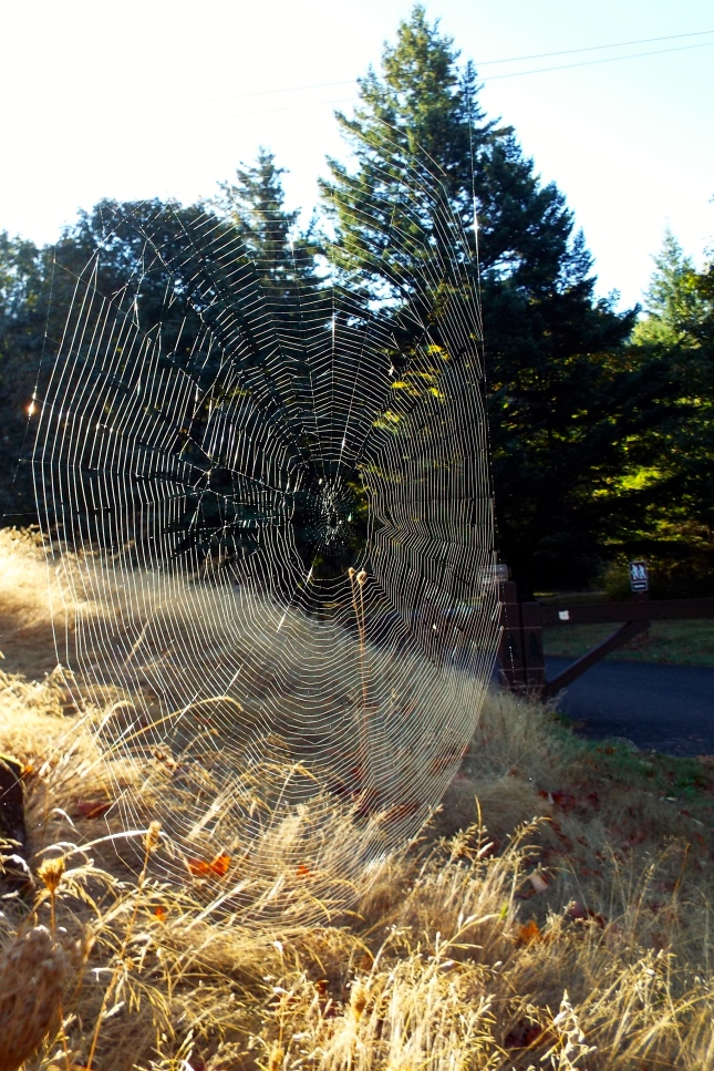 A spider web glistening at the entrance to the Wyeth Campground and trailhead. Photo by Tim Graves
