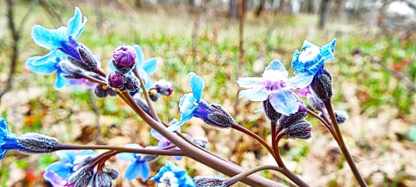 Purple Spring. Photo by Tim Graves. Creative Commons License BY-NC-ND 3.0 https://creativecommons.org/licenses/by-nc-nd/3.0/us/